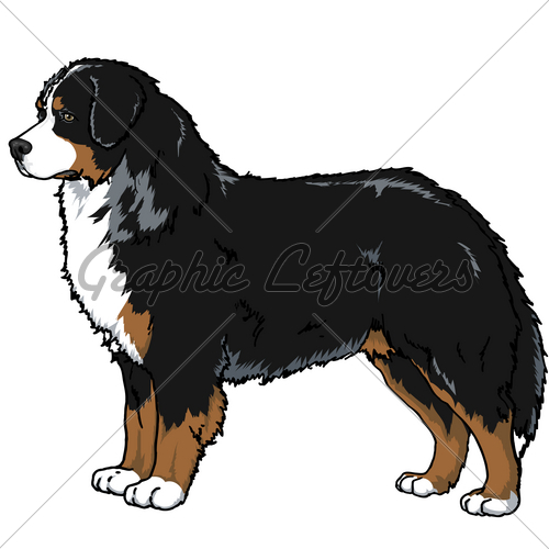 500x500 Graphics For Bernese Mountain Dog Graphics