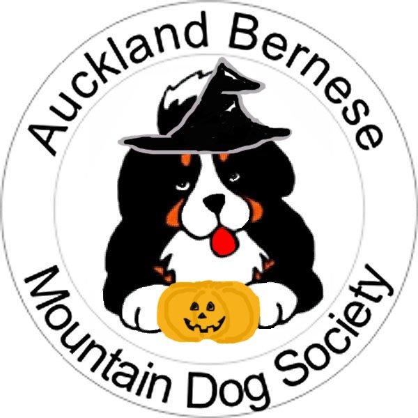 600x600 Imagin Bernese, Bernese Mountain Dogs, Te Kauwhata, New Zealand