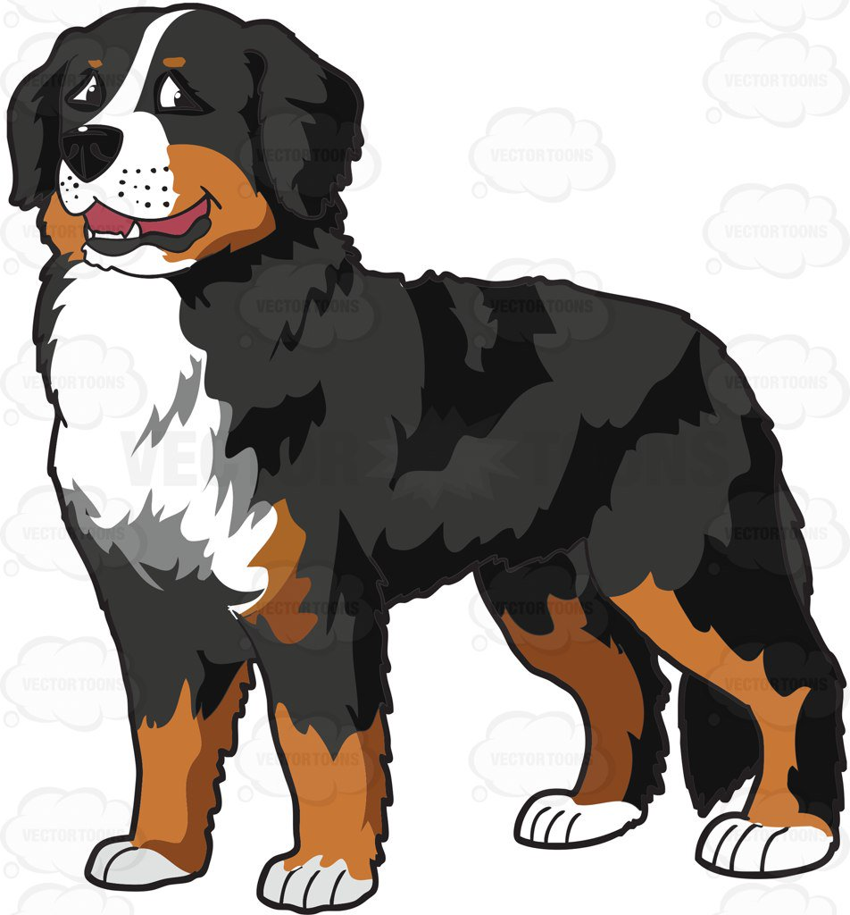 952x1024 A Very Nice Bernese Mountain Dog Cartoon Clipart
