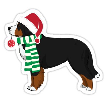 375x360 Bernese Mountain Dog