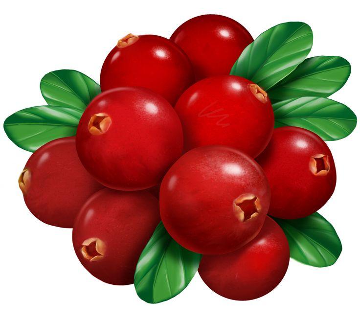 736x662 485 Best Fruit And Vegetables Clip Art Images Foods