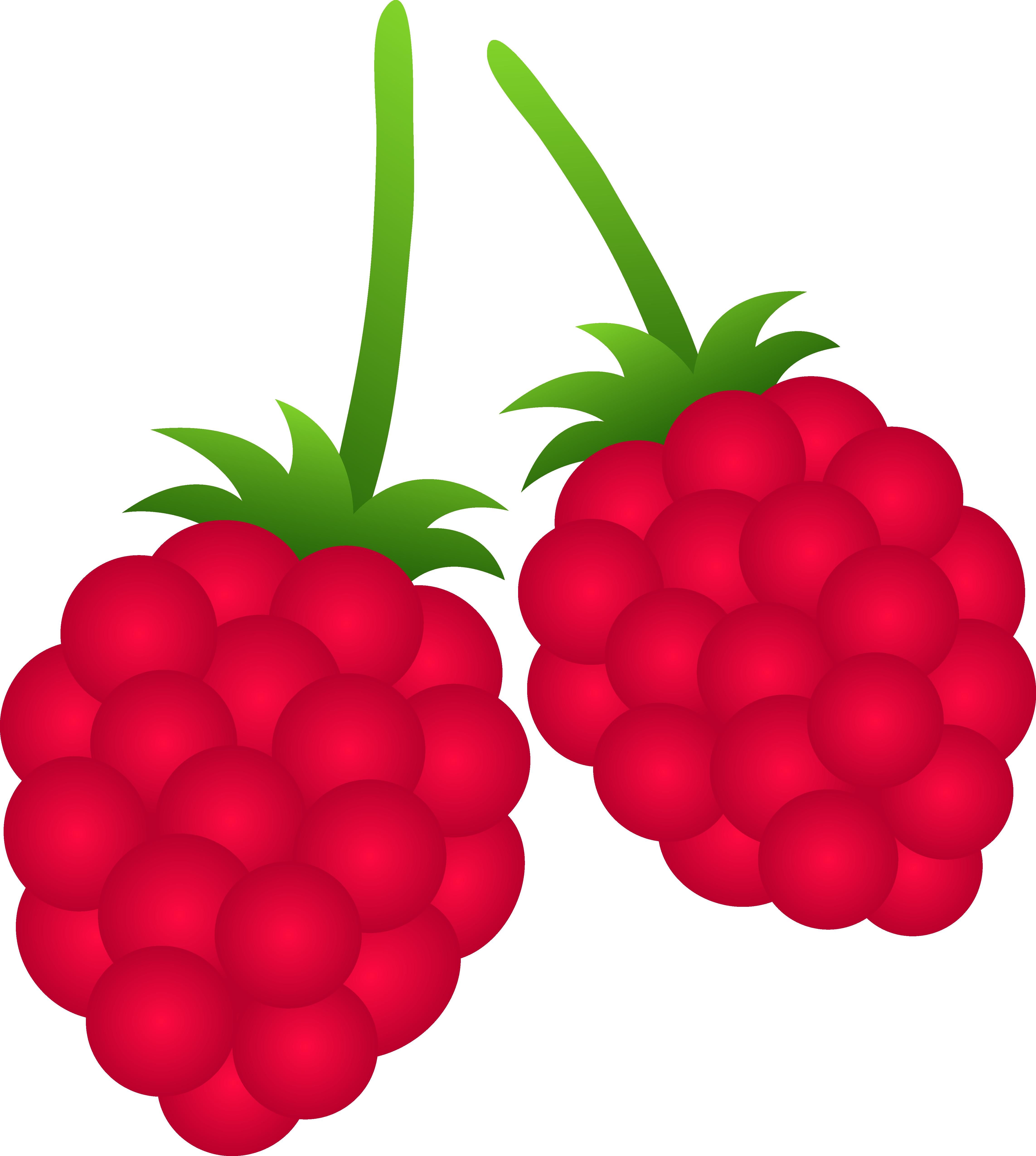 4571x5098 Two Raspberries
