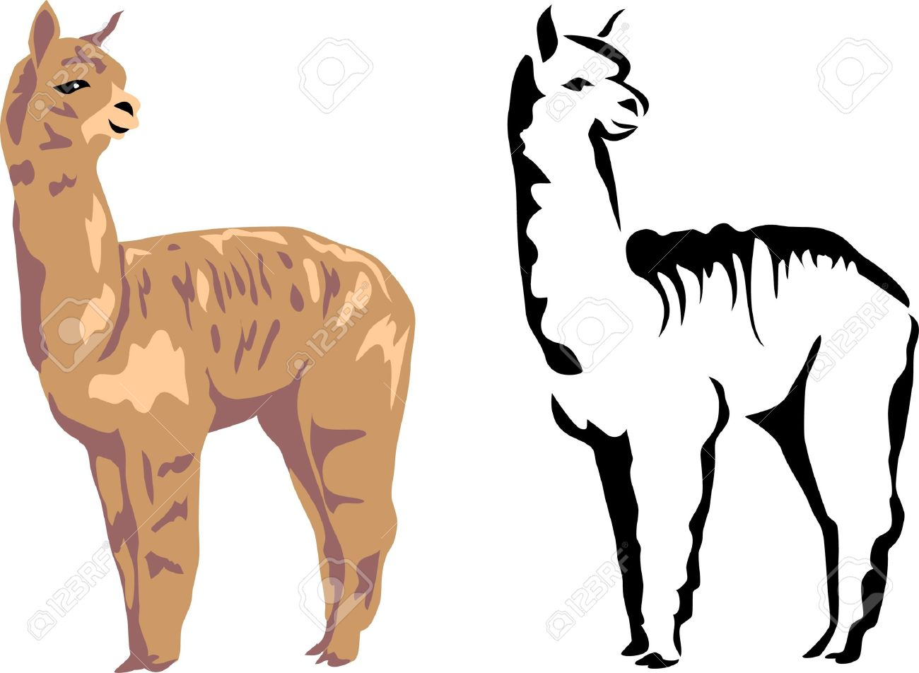 1300x952 Alpaca Clipart Difference Between
