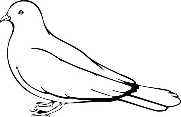 600x388 Bird clipart pigeon