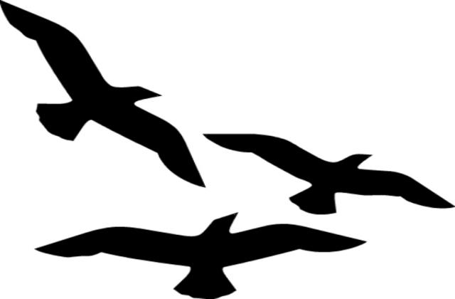 640x420 Sea Bird Clipart Flying