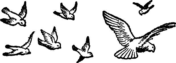 618x223 Bird Clipart Many