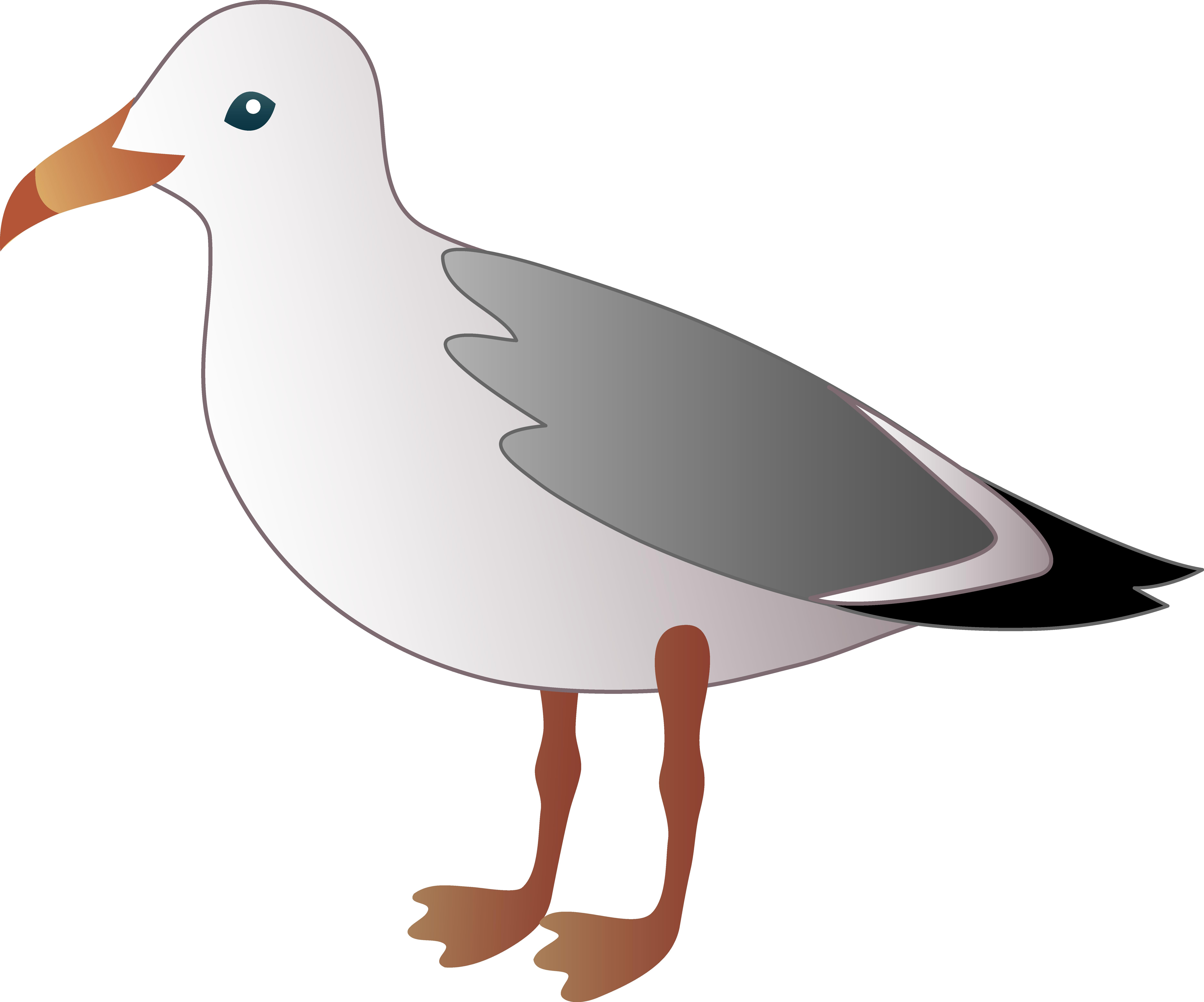 7458x6204 Little Seagull