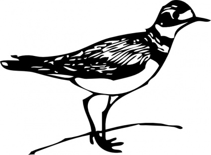 425x313 Outline Bird Lineart Killdeer Walk Walking Animal Vector, Free