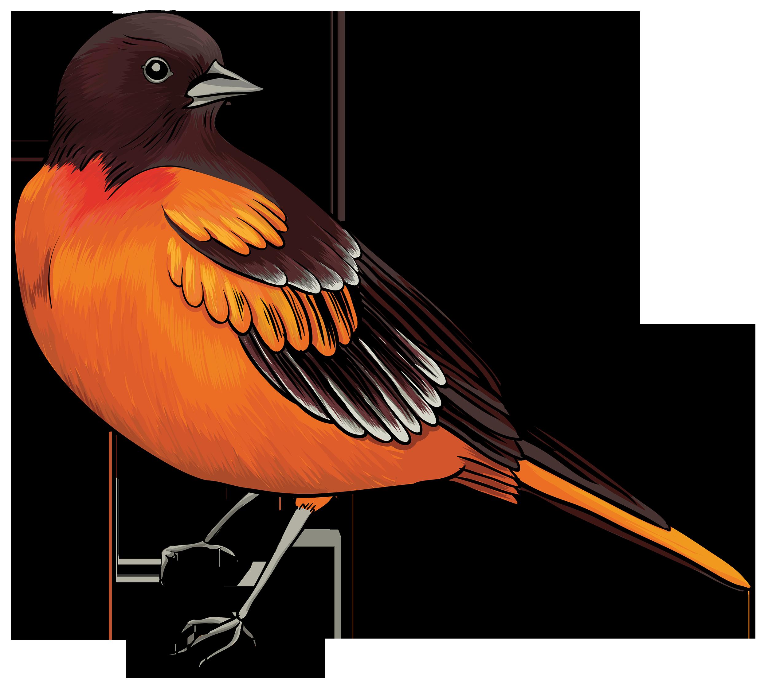 2500x2241 Black And Orange Bird Png Clipart