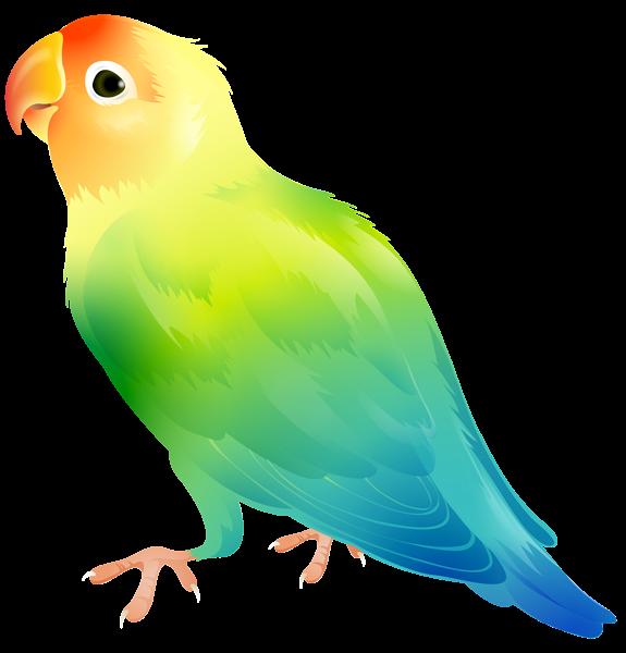 575x600 Parrot Bird Png Clip Art Imageu200b Gallery Yopriceville
