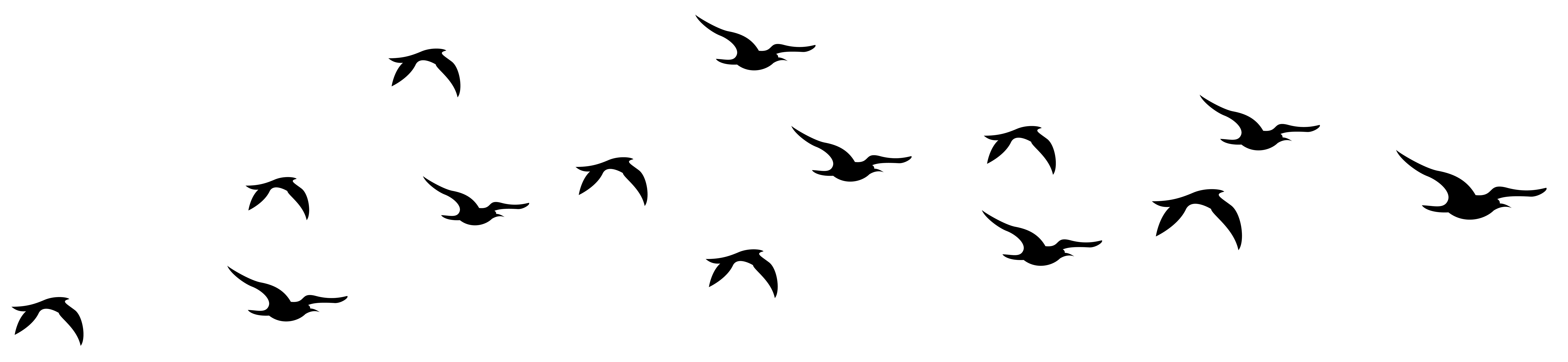 Birds transparent background. Bird clipart free download