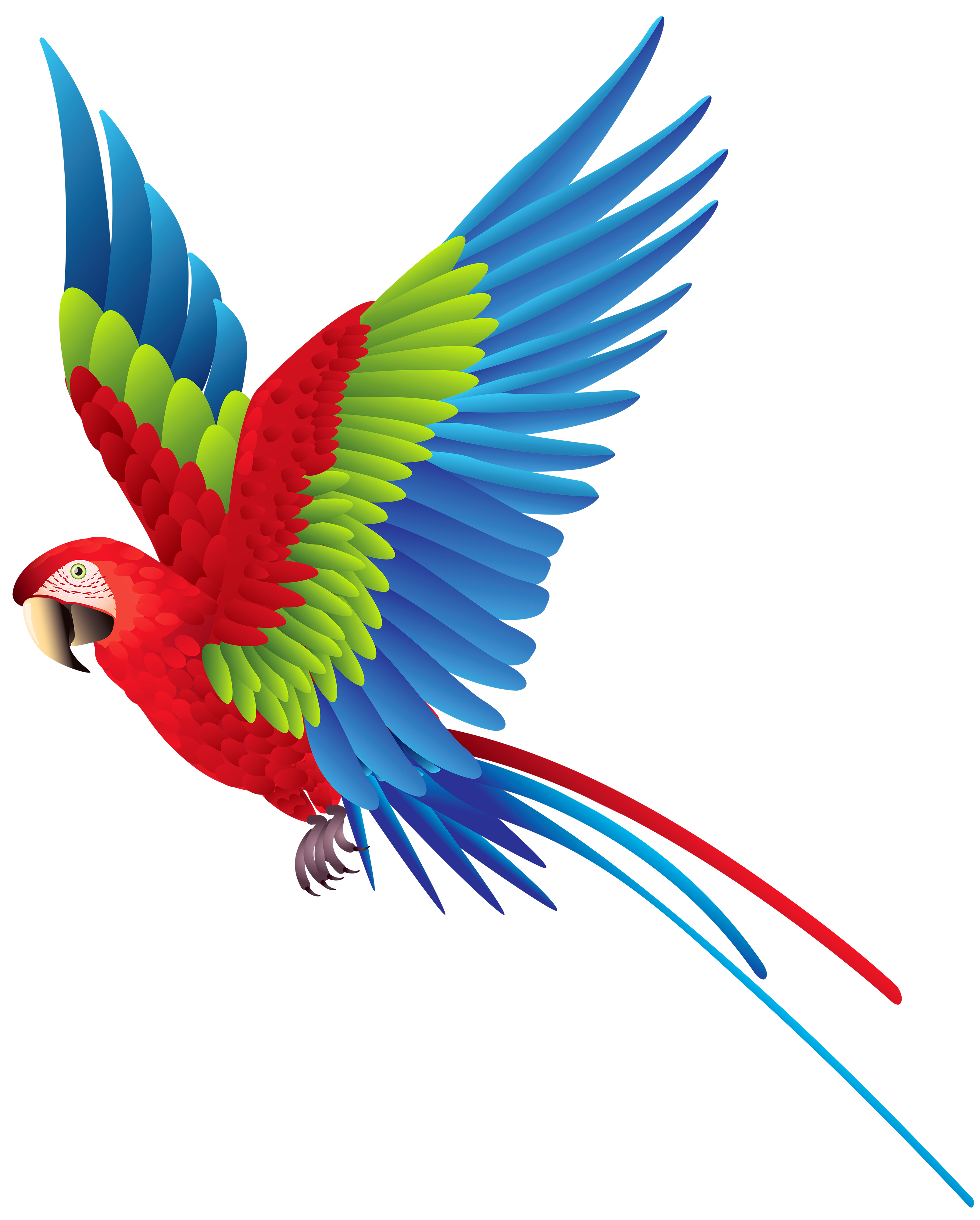 3214x4000 Colourful Parrot Png Clipart