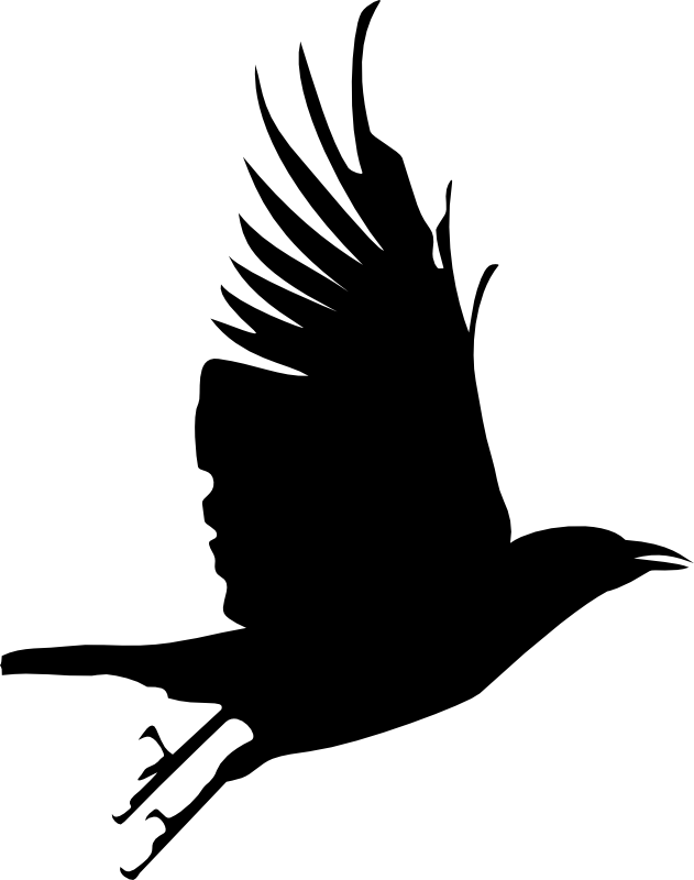 631x800 Crow Clipart Transparent Background