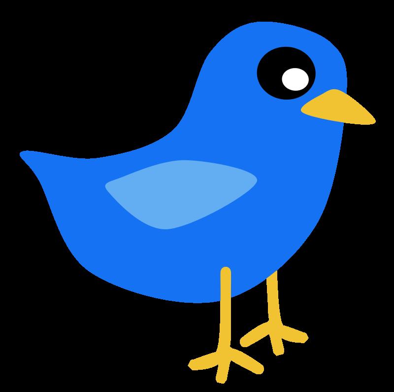 800x795 Free Clipart Blue Bird Scout