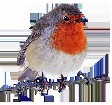 384x360 Bird Clip Art