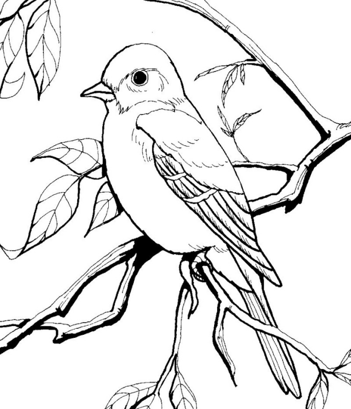 687x800 Epic Blue Bird Coloring Pages 15 On Seasonal Colouring Pages