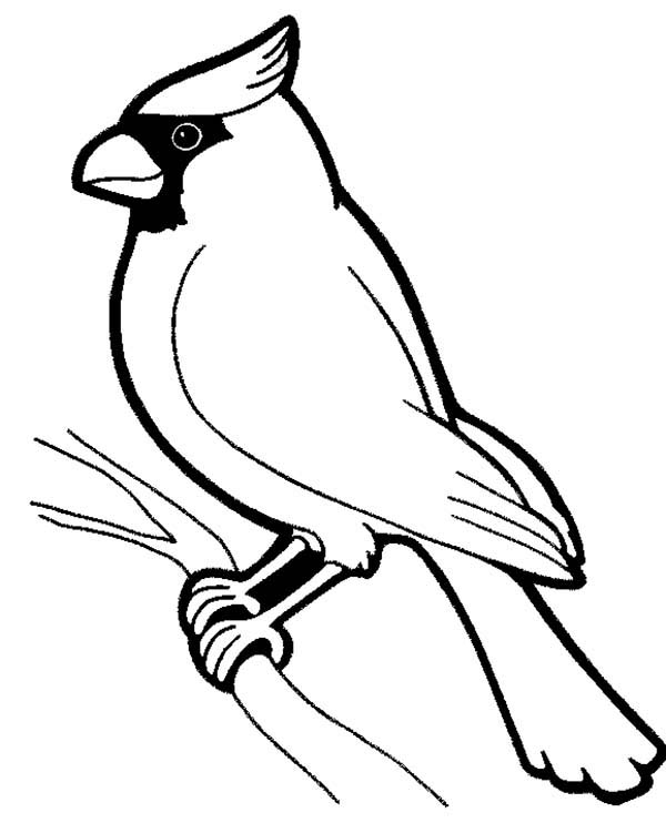 600x751 Male Cardinal Bird Coloring Page Coloring Sun