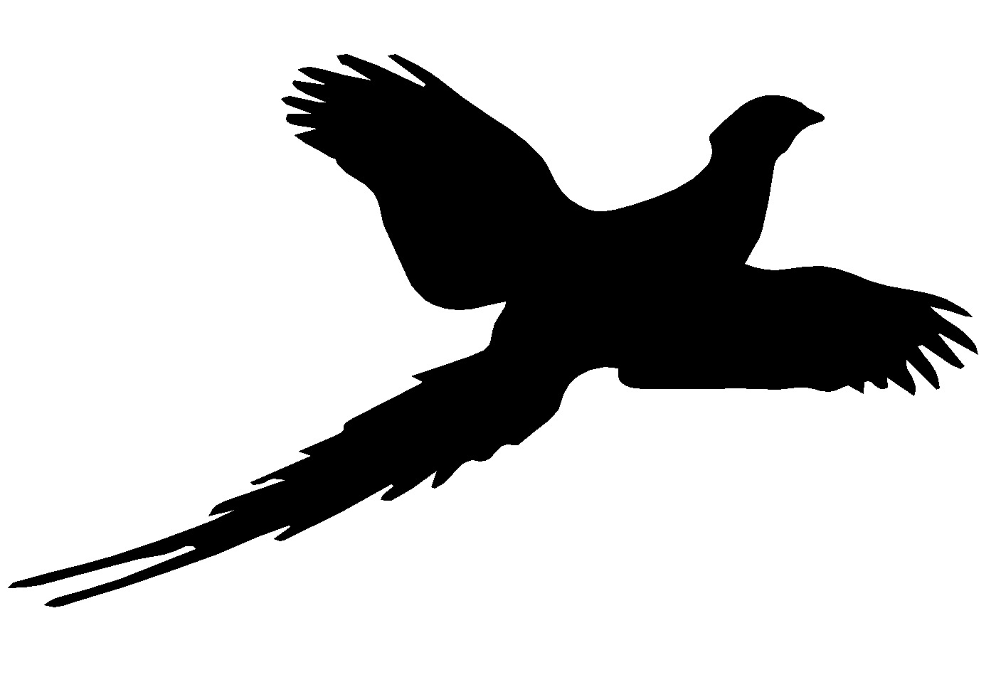 1407x966 Hunting Clipart Pheasant Hunting