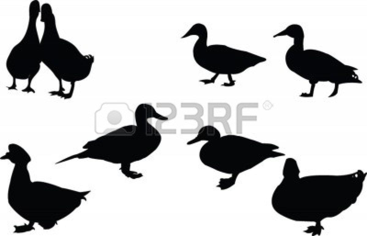 1200x771 Mallard Duck Silhouette Clipart