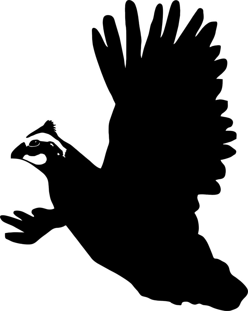 818x1024 Quail Rising, Quail Hunting Decal Quails, Hunting Gear And Cricut