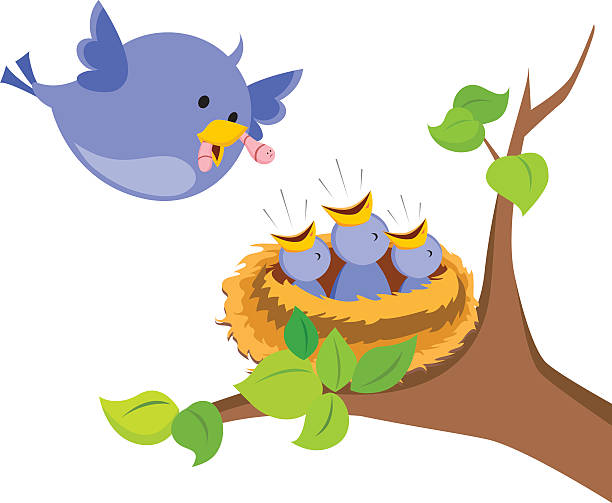 612x503 mother bird clipart