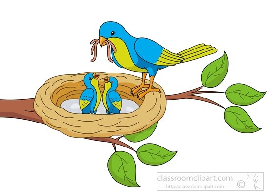 550x400 Bird#39s Nest clipart bird nest