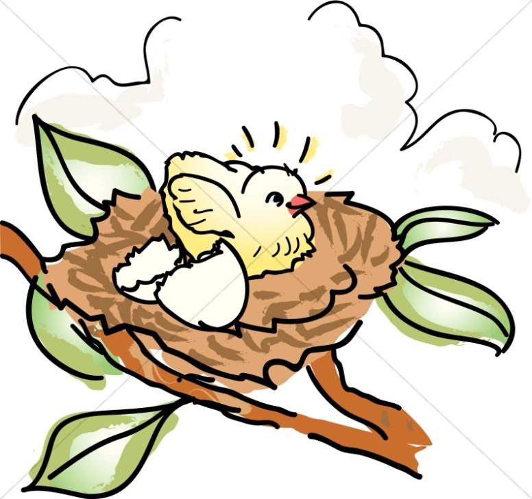 776x729 Baby Bird In Nest Clipart