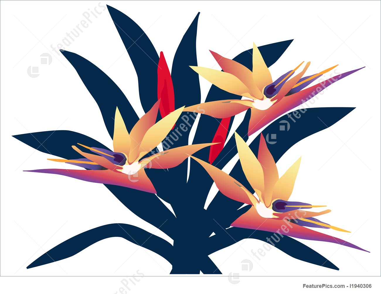 1300x1003 Bird Of Paradise Group Illustration