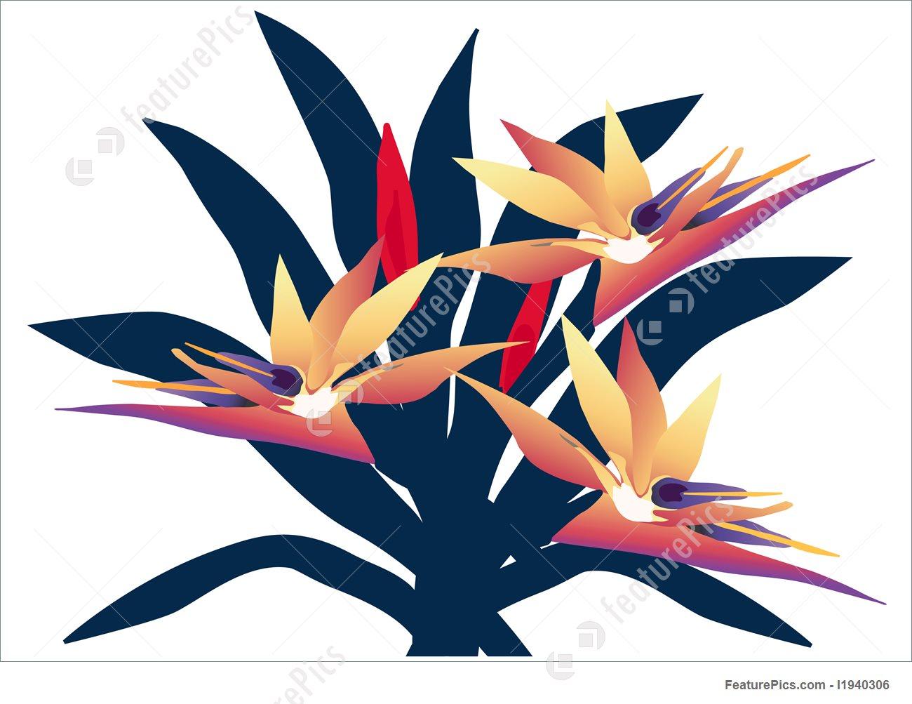 1300x1003 Bird Of Paradise Group Illustration