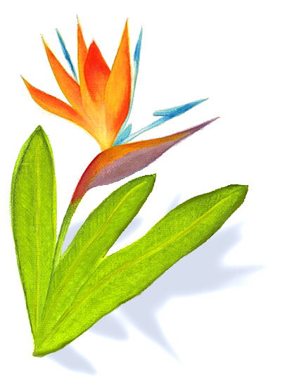 425x550 Bird Of Paradise Clipart