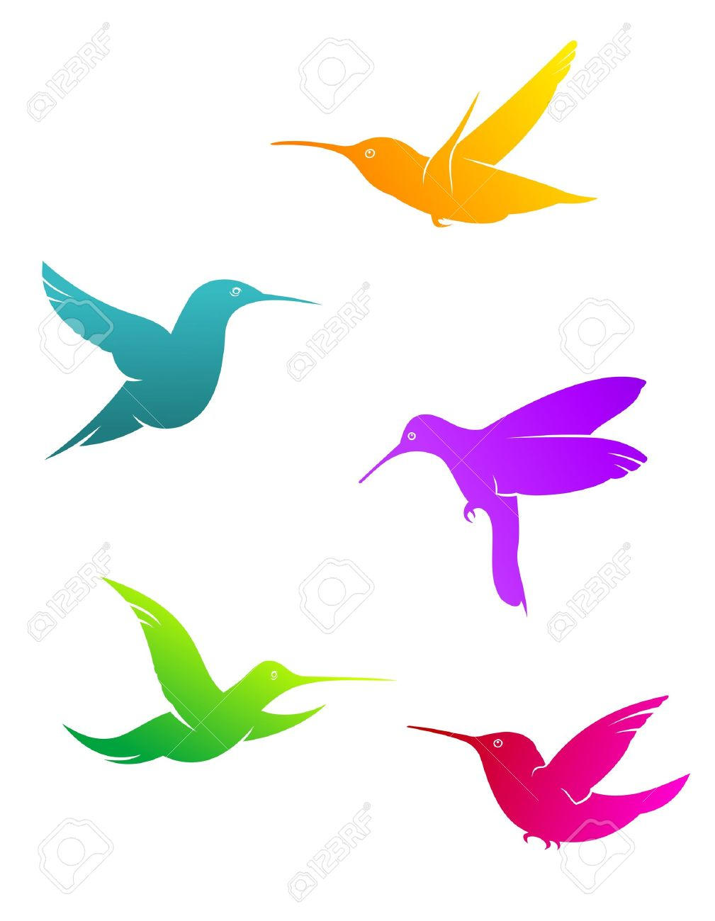 1009x1300 Bird Of Paradise Clipart Colourful Bird