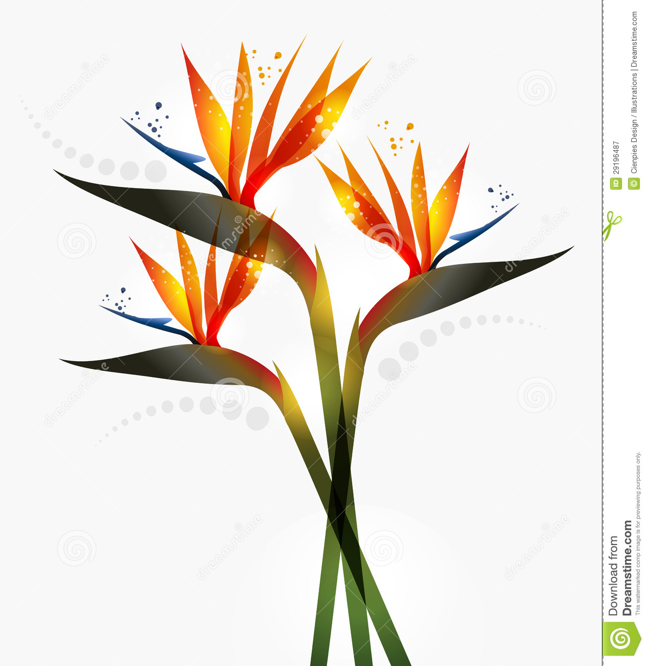 1266x1300 Bird Of Paradise Clip Art Cliparts