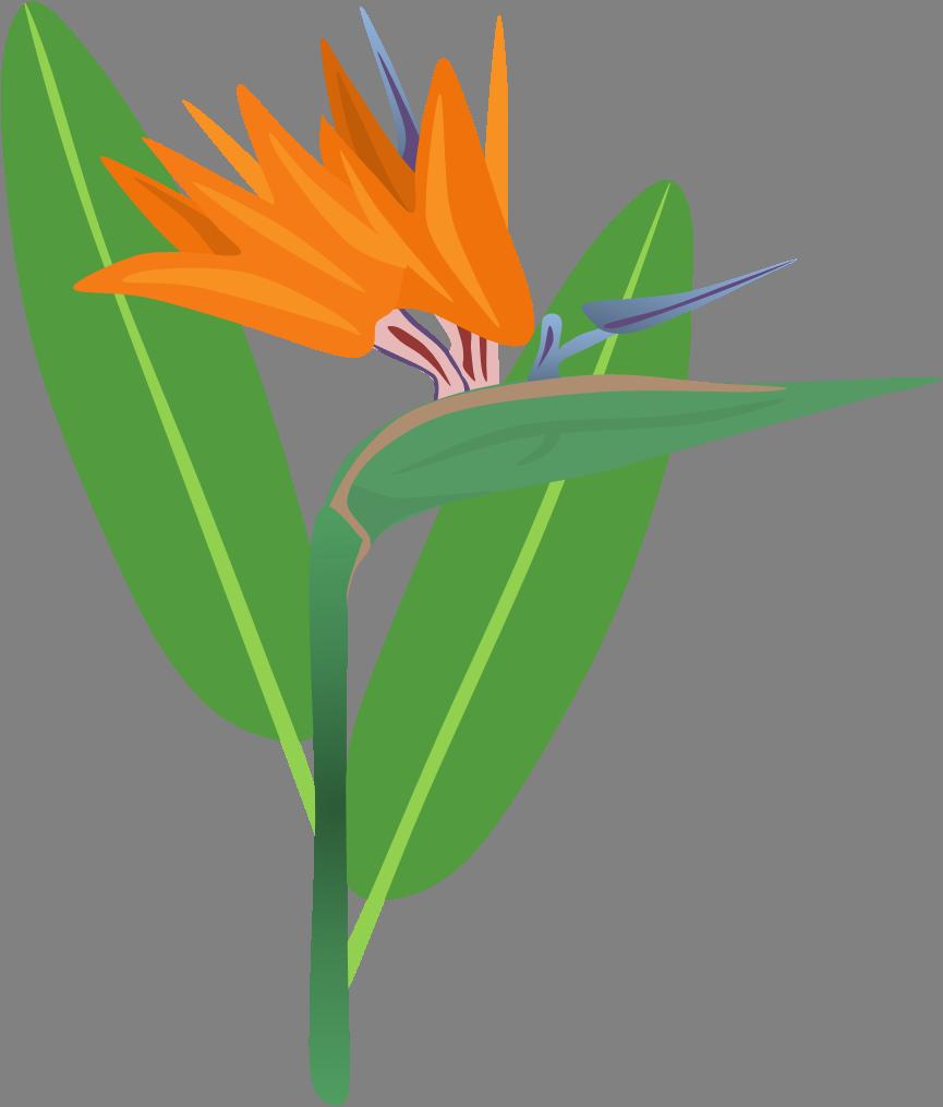 865x1015 Bird Of Paradise Flower By Adamzt2
