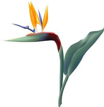 340x351 Bird Of Paradise Flower Clip Art