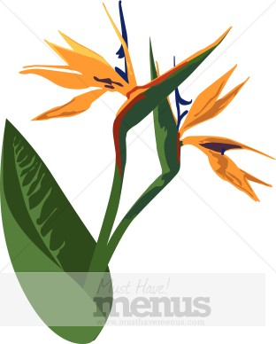 312x388 Birds Of Paradise Clipart Caribbean Clipart