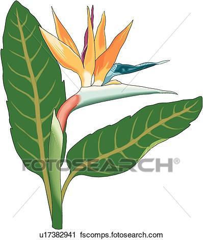 398x470 Clipart Of Bird Of Paradise U17382941