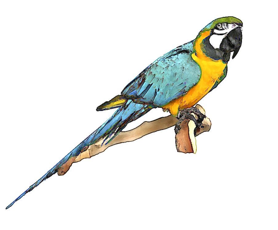 904x750 Bird Of Paradise Clip Art