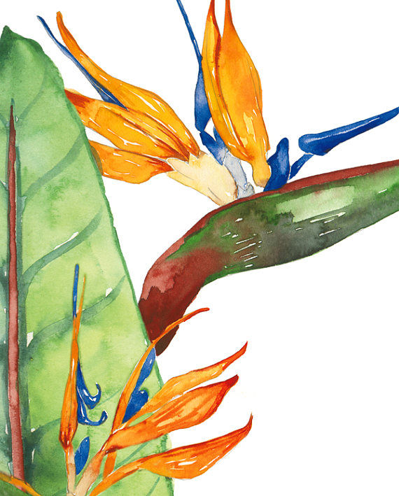 570x709 Tropical Plant Clip Art, Exotic Plants Clipart, Watercolor