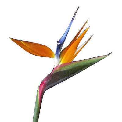 400x400 Bird Of Paradise Clipart Paradise Flower