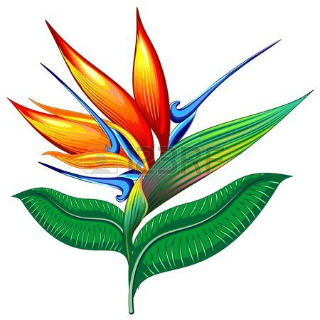 450x450 Bird Of Paradise Flower, Exotic Botanical Vector Illustration