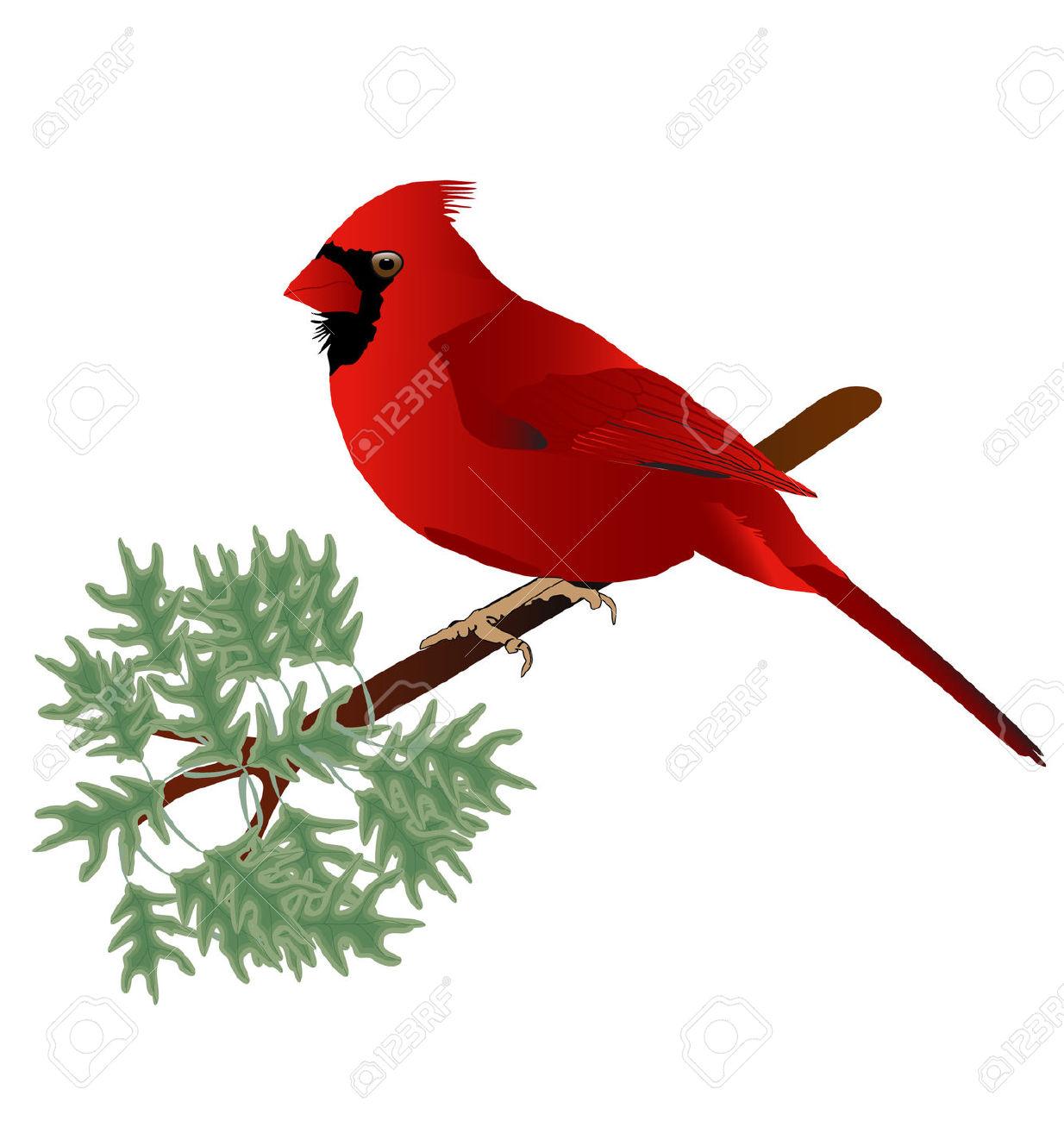 1234x1300 Cardinal Bird On Branch Clip Art Cliparts