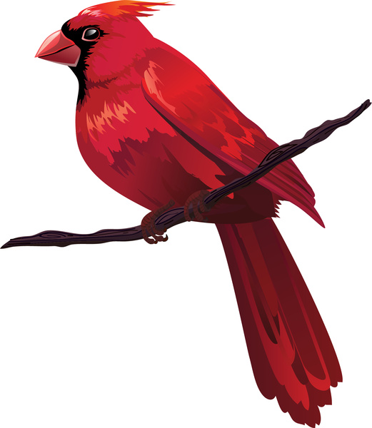 521x600 Red Bird On Tree Branch Free Vector In Adobe Illustrator Ai ( Ai