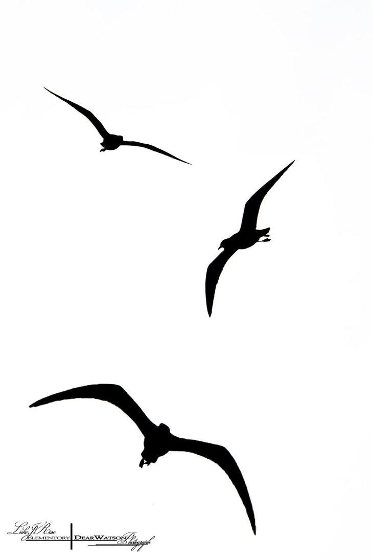 730x1095 Flying Bird Silhouette Clipart
