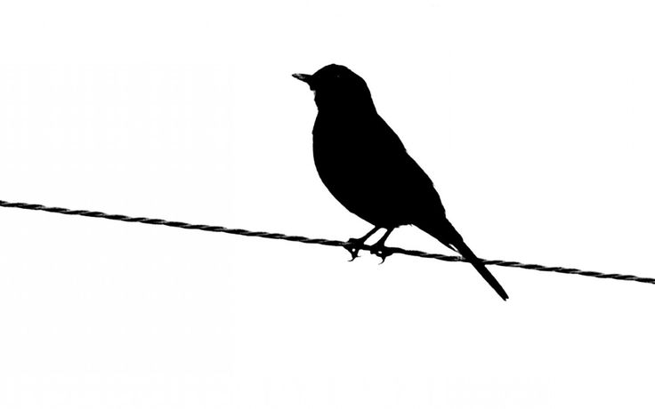 736x460 Bird Silhouette Black Bird Silhouette Clip Art Childrens Image