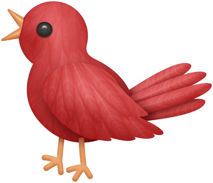736x633 Bird House Clipart Bird Watching