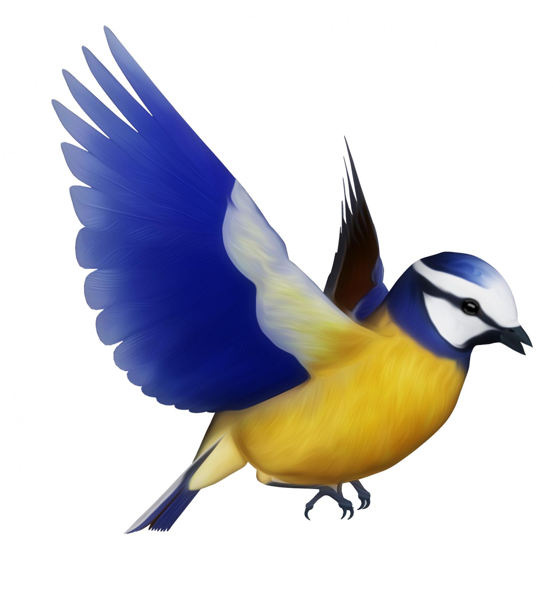 1807x1920 Blue Tit Bird Clipart Free Stock Photo Public Domain Pictures