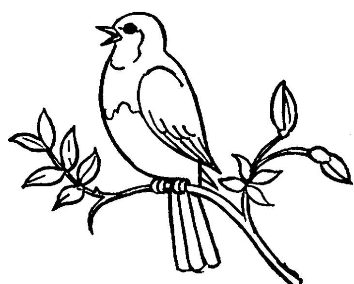 731x585 Bird Black And White Clip Art