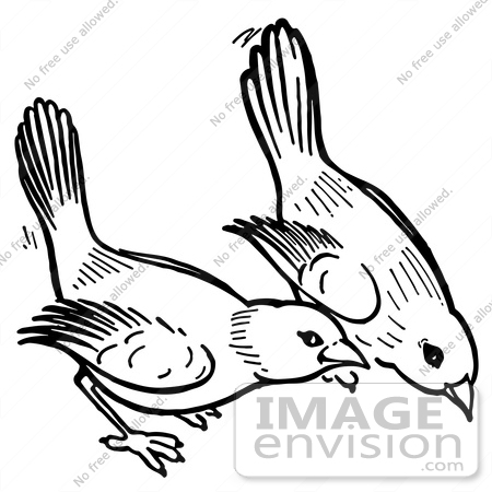 450x450 Clipart Of Birds Pecking The Ground In Black And White