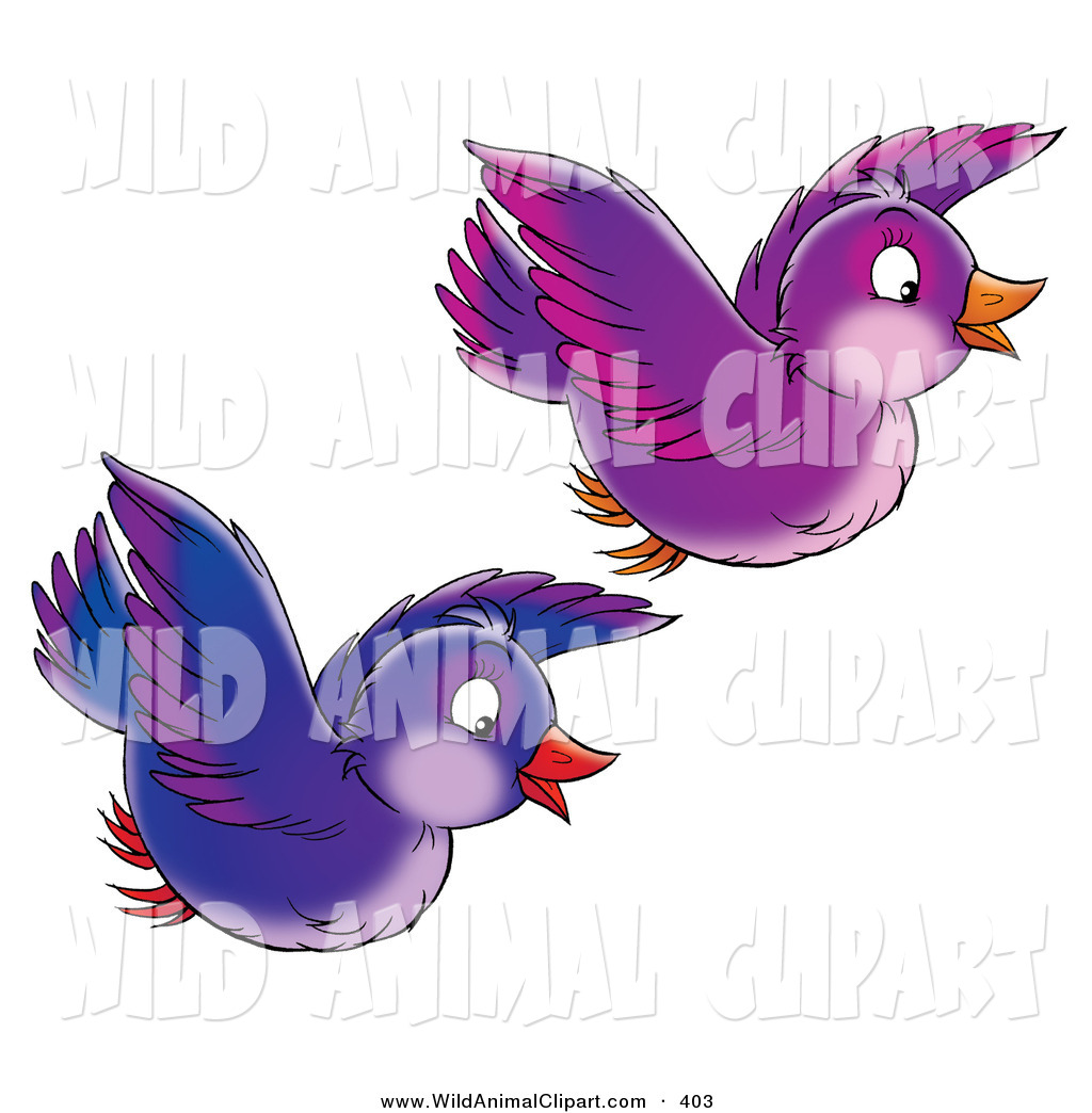 1024x1044 Clip Art Of A Two Purple And Blue Singing Birds Flying Together