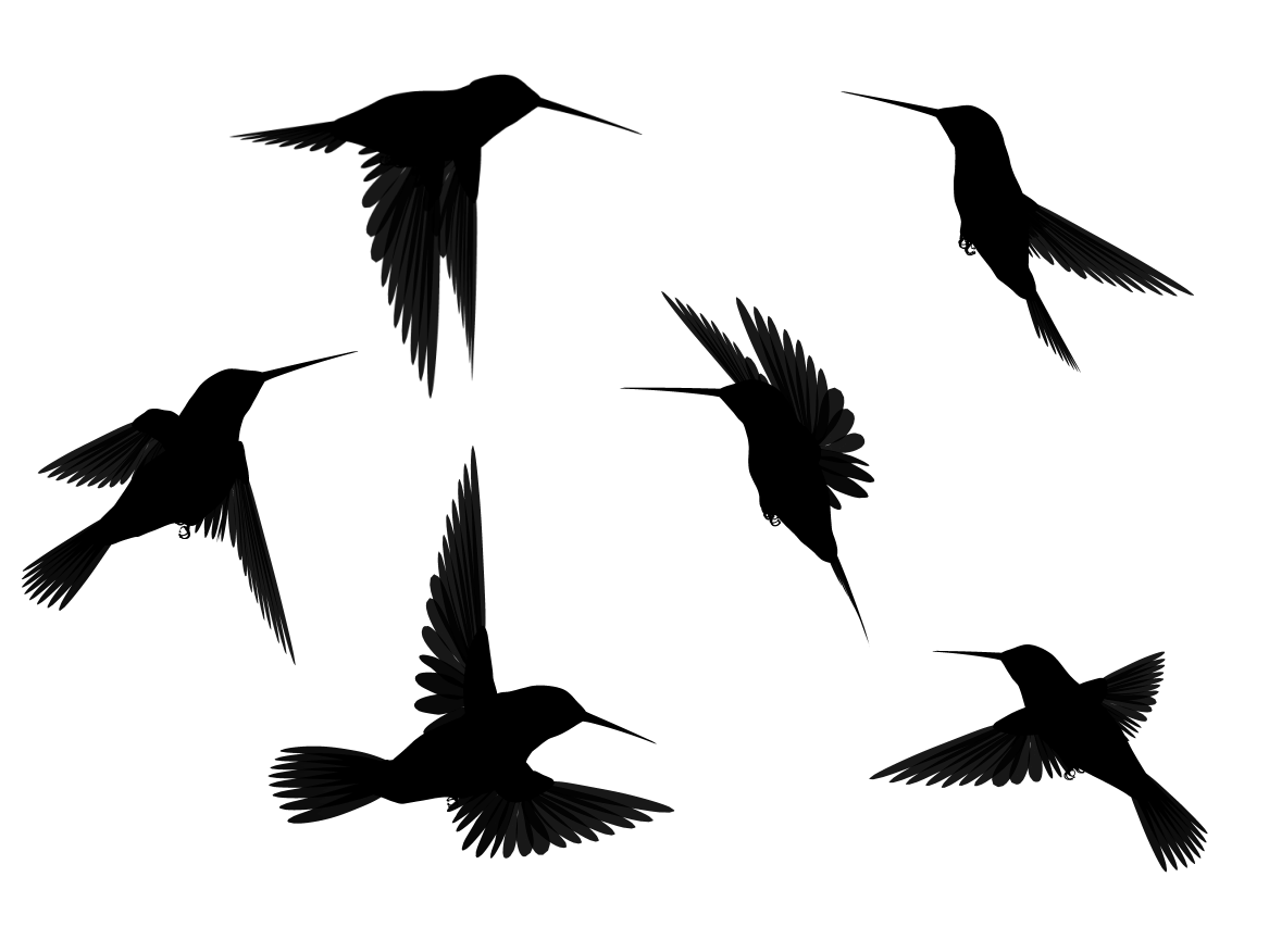 1167x876 Drawn Bird Flight Silhouette Clip Art